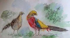 Golden Pheasant - Kostetskaya Alexandra