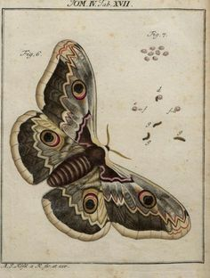 perform in a moth storytelling