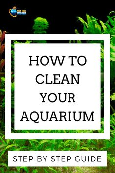 Step by step guide to clean the aquarium. Aquarium cleaning tips for better fish tank maintenance.