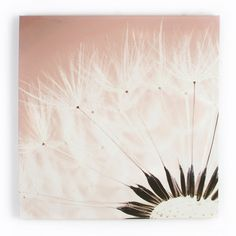 Delicate Dandelion With Glitter Canvas Art - Floral Wall Art by Graham  Brown
