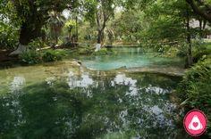 Tamasopo, significa lugar que gotea, es un complejo con varias cascadas y albercas naturales de agua cristalina, las cascadas tienen un aproximado de 15 metros de altura.