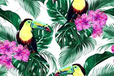 Toucans,tropical leaves pattern by Tropicana on @creativemarket