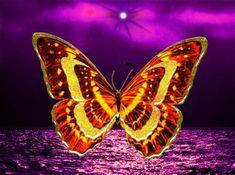 Fondos De Pantalla De Mariposas Butterfly Wallpaper, Moth, Insects, Unicorn, Artist, Animals, Bella, Tarot, Virginia