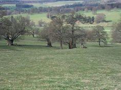 Chatsworth park