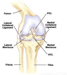 meniscal tears .the Steadman Clinic Vail, CO | Sports Medicine & Orthopaedic Surgery | Steadman Hawkins
