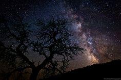 night sky, tree silhouette