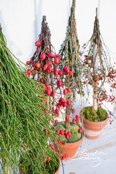 Christmas Crafts, Christmas Decorations, Plant Hanger, Diy And Crafts, Create Yourself, Halloween, Plants, Provence, Google