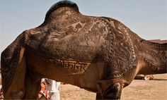 Camel detailing in India…