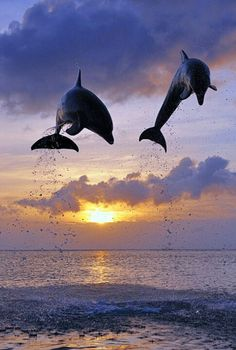Beautiful and playful Dolphins are truly free spirits.