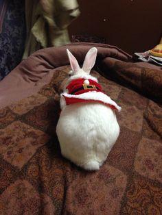 Santa dress for rabbit