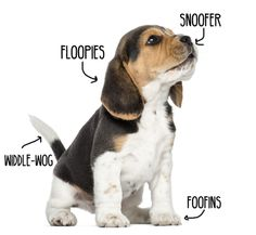 a very scientific puppy diagram