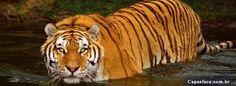 Resultado de imagem para imagens lindas de animais selvagens para facebook