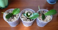 Best 11 garden design ideas for small gardens uk – SkillOfKing. Orchid Flower Arrangements, Orchid Planters, Orchids Garden, Orchid Terrarium, Indoor Garden, Indoor Plants, Small Garden Uk, Orchids In Water, Growing Orchids