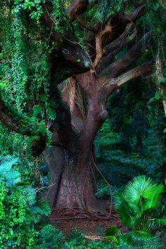 Jungle Fever by Reed Miller. Honolua Bay in Maui Climbin' Trees!