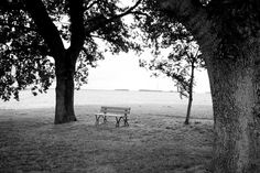 Bench and trees 2   Free stock photos - Rgbstock -Free stock ...