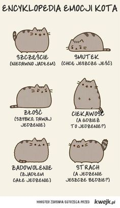 historie o kotach... - www.rexu.fora.pl Wtf Funny, Funny Cats, Funny Memes, Im Jealous, Pusheen Cat, Everything And Nothing, Cute Cuts, Sarcastic Humor, Reaction Pictures
