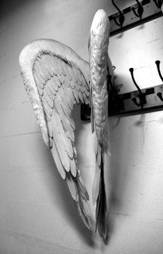 Confessing my sins...time to hang the wings and call it a day. Good night all.