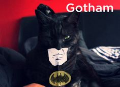 cats as fonts | Gotham