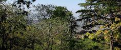 Kasauli Hills : Gilbert's Trail, HIMACHAL PRADESH