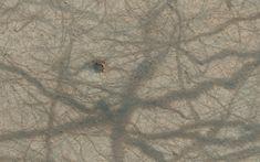 Mars dust devil trails