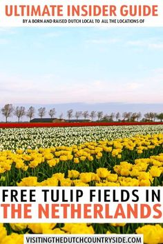 Where to see and find Dutch tulip fields in The Netherlands, Holland & Amsterdam – Best Europe Destinations Tulip Fields Netherlands, Holland Netherlands, Travel Netherlands, South Holland, Day Trips From Amsterdam, Amsterdam Travel, Amsterdam Itinerary, Backpacking Europe, Europe Travel Guide