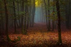 forest opening - Cerca con Google