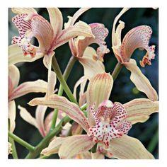 Cymbidium Orchids Floral Acrylic Wall Art - flowers floral flower design unique style