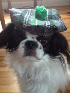 Dog Hat, Irish Tam for St. Patrick's Day