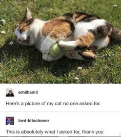 Calico Cats Appreciation Pics And Vids (Mini Compilation) - World's largest collection of cat memes and other animals Funny Animal Memes, Funny Animal Pictures, Cute Funny Animals, Cat Memes, Cute Baby Animals, Funny Cute, Animals And Pets, Cute Cats, Hilarious
