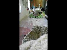 Rababerblad  i beton - YouTube