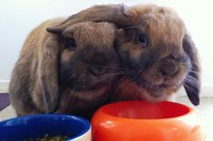Bunny throws his ear around his brother - February 17, 2013 - Happy Bunday!