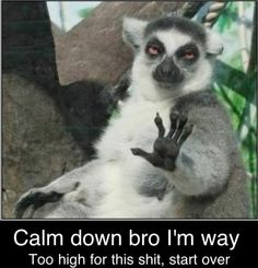 Animals with captions. Always funny.