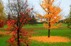 the wonderful colors of autumn (Pozzolo Formigaro,Italy)