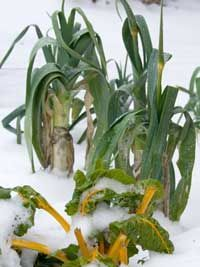 How does snow affect your garden? Find out in this article: http://www.growveg.com/growblogpost...