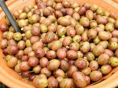 Un ricetta della nonna per gustare subito le vostre olive al profumo di prezzemolo e aglio