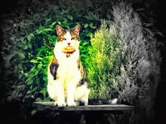 Basil the Bionic Cat's Blog: Welcome to The Monday Meow ~ Getting All Arty-Farty With Our Photo's ~ Part Four