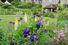 Image from http://m5.paperblog.com/i/56/560558/lupins-and-alliums-at-gravetye-manor-east-gri-L-8PQkaa.jpeg.