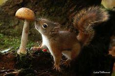 Love Squirrels & mushrooms  Cute adorable pic~ perfect