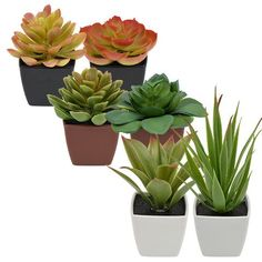 Artificial Potted Succulent Plants | $1 @ Dollar Tree