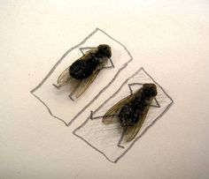 Sunbathing flies