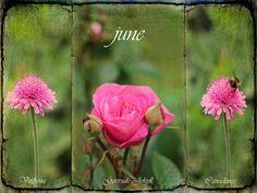 June by Philip Ed, via Flickr