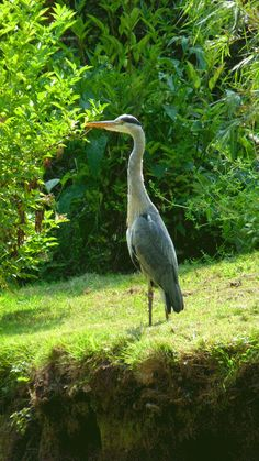 Birdland Park & Gardens at Bourton-on-the-Water, England - Image property of Cheryl Vance (www.clvance.com)