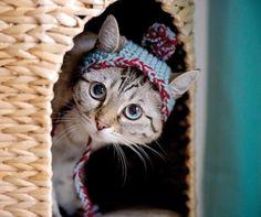 gatos con sombrero mis gafas de pasta06