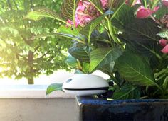 Koubachi - A gadget that tells you what your plants need  Read more: http://www.purewow.com/entry_detail/national/6577/A-gadget-that-tells-you-what-your-plants-need.htm#ixzz2Z8FSphzY