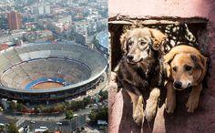 Ciudad de México convierte Plaza de Toros en Santuario para perros de la calle