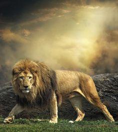 Magnífica fotografía del rey de la jungla!