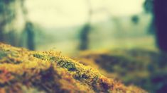 x-miscellaneous-any-with-nice-blurry-edges-motion-blur-428891.jpg (2560×1440)