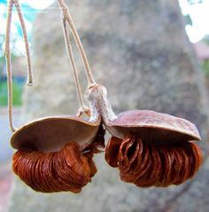 épinglé par ❃❀Catherine Aeschlimann ❁✿à partir de  Hymenosporum flavum