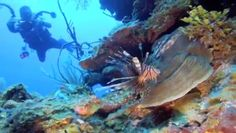 GoPro Roatan Honduras 2012 by Blackflag Productions. So due to a technical problem beyond my control this video is very low quality as my HD file has somehow evaporated from my computer. But better then a kick in the head with a golf shoe. (I think)