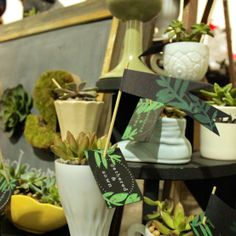 gathered & sown succulents in vintage planters